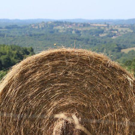 """/eɪ/ as in """"Hay"""""""