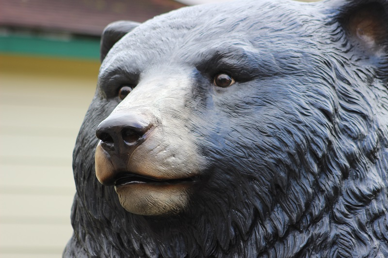 bear face_resized